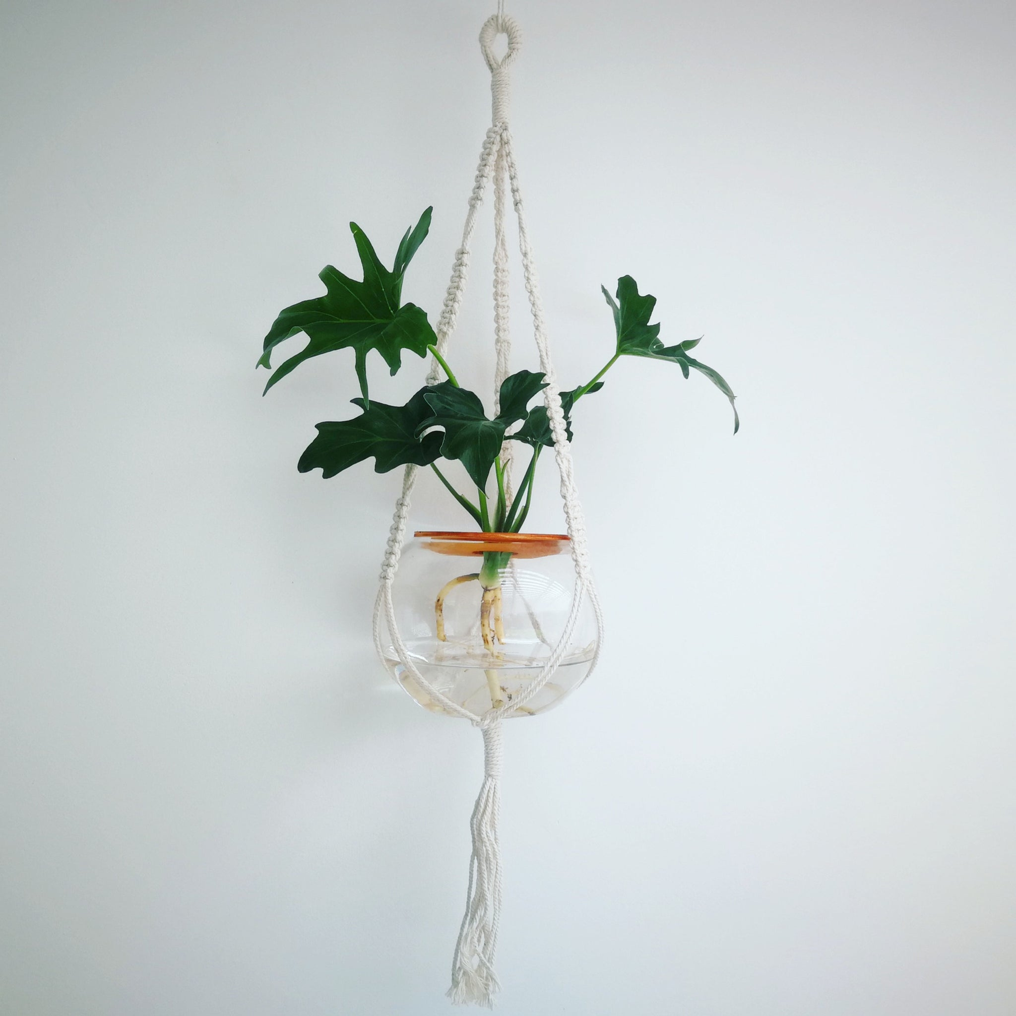 Macrame hanger with fishbowl and philodendron selloum