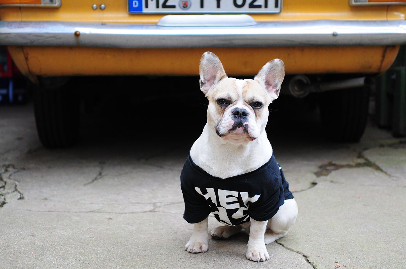 dog with tshirt with 'hey' on it