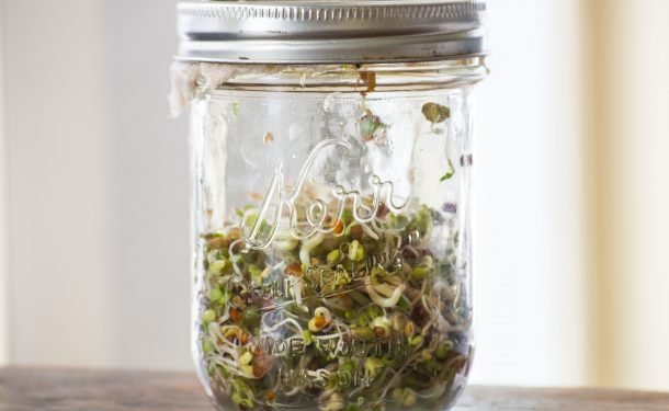 glass jar sprouting can cause salmonella