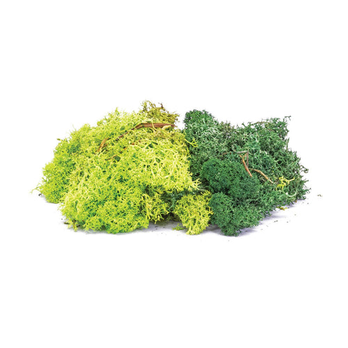 Lichen - Green Mix - R7194 -Available