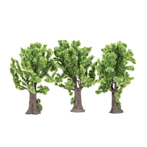 Maple Trees  Qty 6 - R7203 -Available