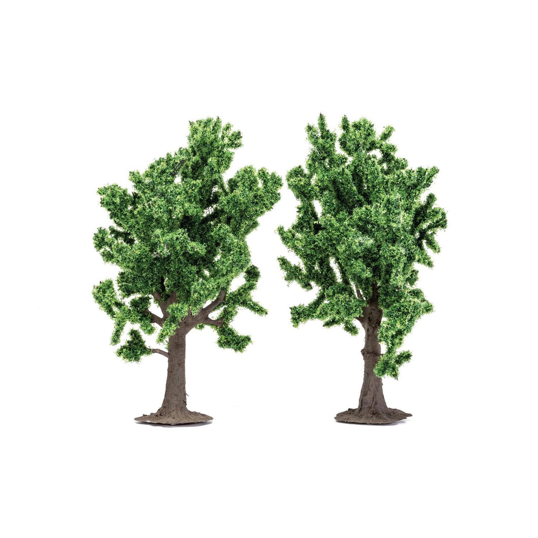 Beech Trees  Qty 6 - R7204 -Available