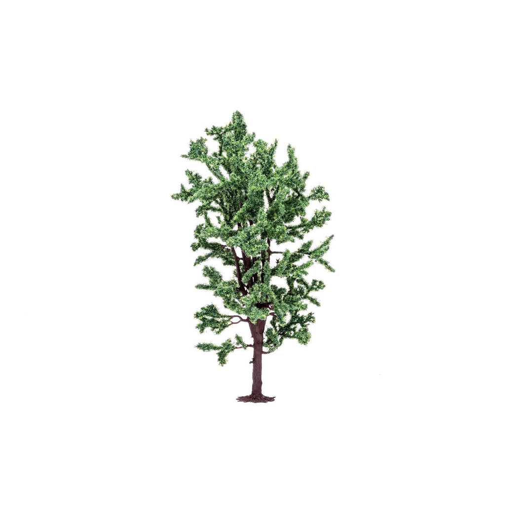 Horse Chestnut Tree  Qty 6 - R7211 -Available