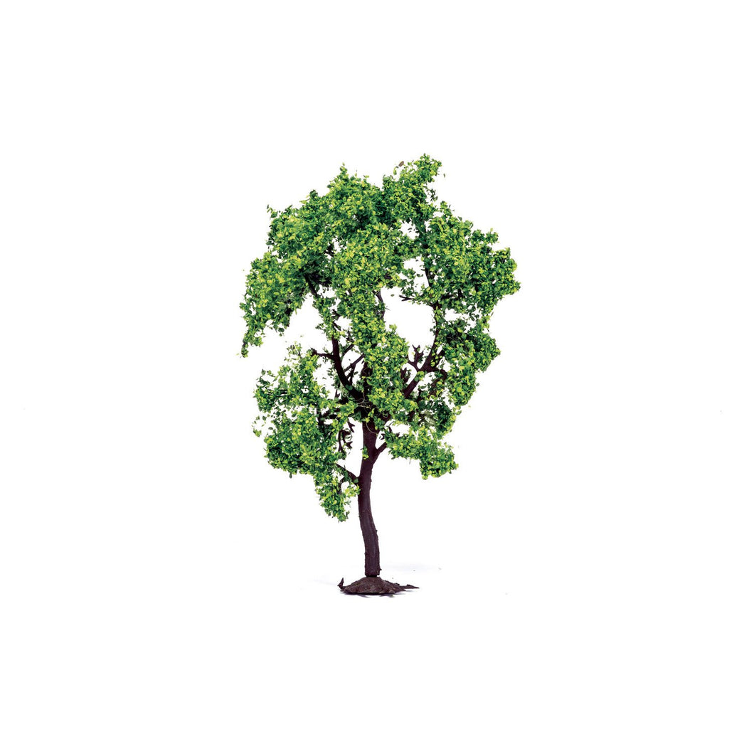 Pear Tree  Qty 6 - R7214 -Available