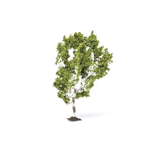 Birch Tree  Qty 6 - R7215 -Available