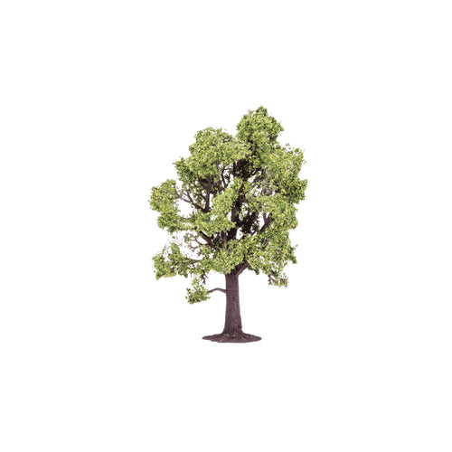 Beech Tree  Qty 6 - R7219 -Available