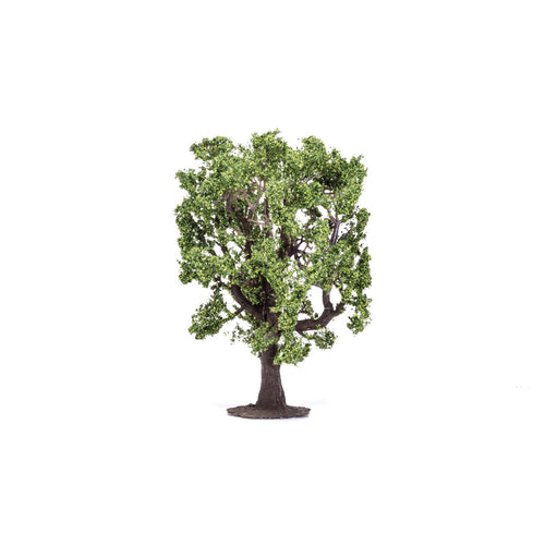 Oak Tree  Qty 6 - R7220 -Available