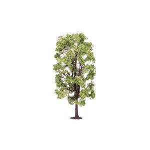 Lime Tree  Qty 6 - R7221 -Available