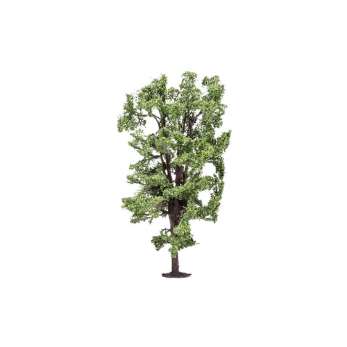 Horse-Chestnut Tree  Qty 6 - R7222 -Available