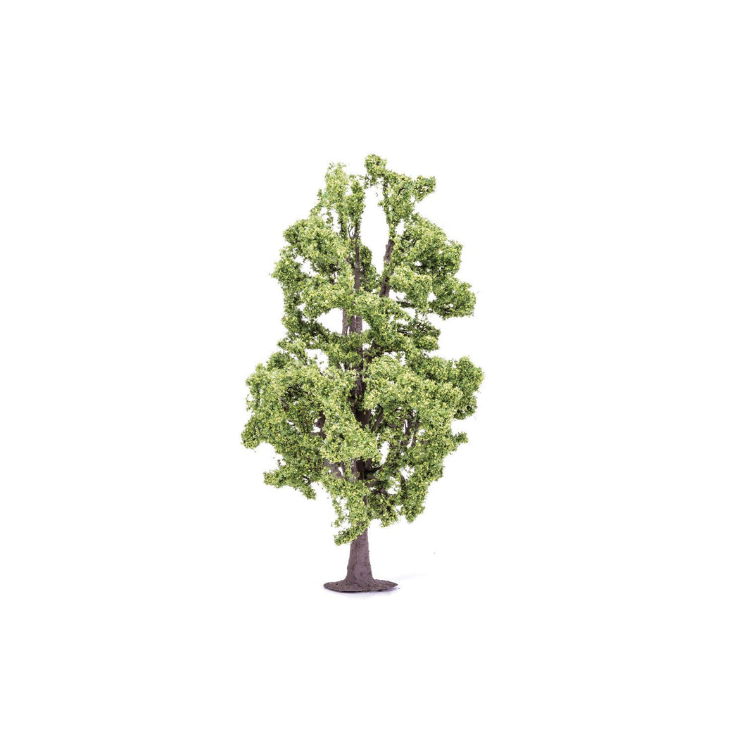 Lime Tree  Qty 6 - R7223 -Available