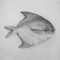 Wild Chinese Pomfret<p>$6.40/100g<br>Fresh Whole Fish