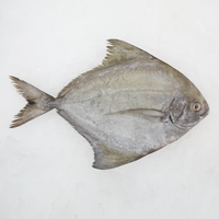 Wild Black Pomfret<p>$1.90/100g<br>Fresh Whole Fish