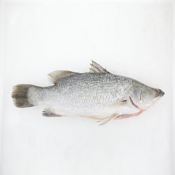 Wild Seabass<p>$2.60/100g<br>Fresh Whole Fish