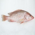 Wild Red Snapper<p>$4/100g<br>Fresh Whole Fish