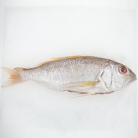 Wild Sea Bream<p>$2.57/100g<br>Fresh Whole Fish