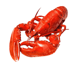 Boston Lobster<p>400grams<br>Frozen
