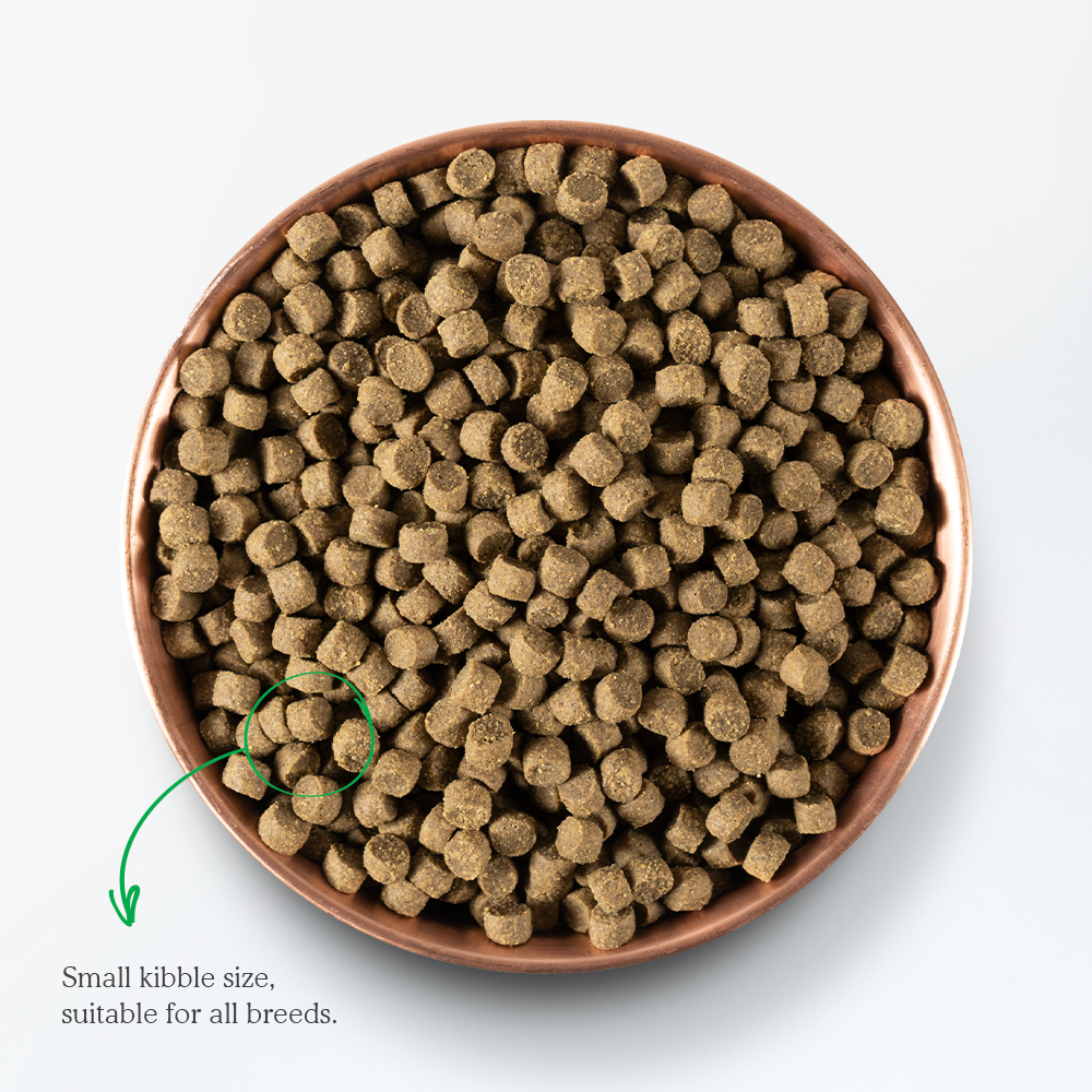 Open Farm Wild-Caught Salmon Dry Dog Food kibble image