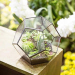 Load image into Gallery viewer, Dodecahedron Glass Terrarium