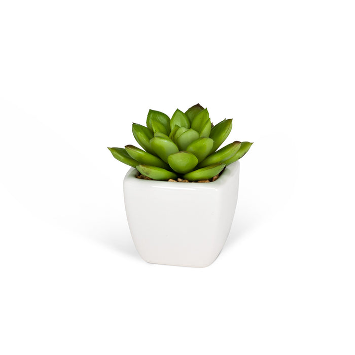 Succulents - Tapered Pot