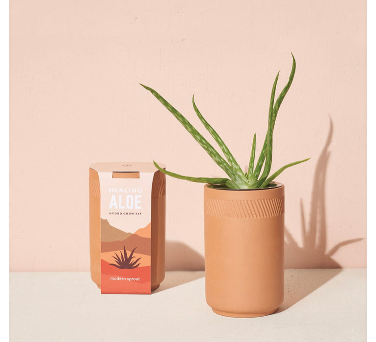 Terra Cotta Grow Kit - Aloe
