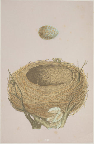 A2 Poster - A Natural History of the Nests and Eggs of British Birds- Blackbird