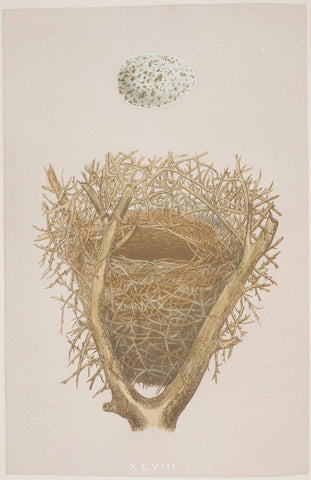 A2 Poster - A Natural History of the Nests and Eggs of British Birds - Magpie