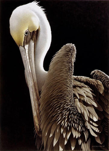 Brown Pelican white and yellow head, shades of brown, detailed wing feathers, eye and beak on black background