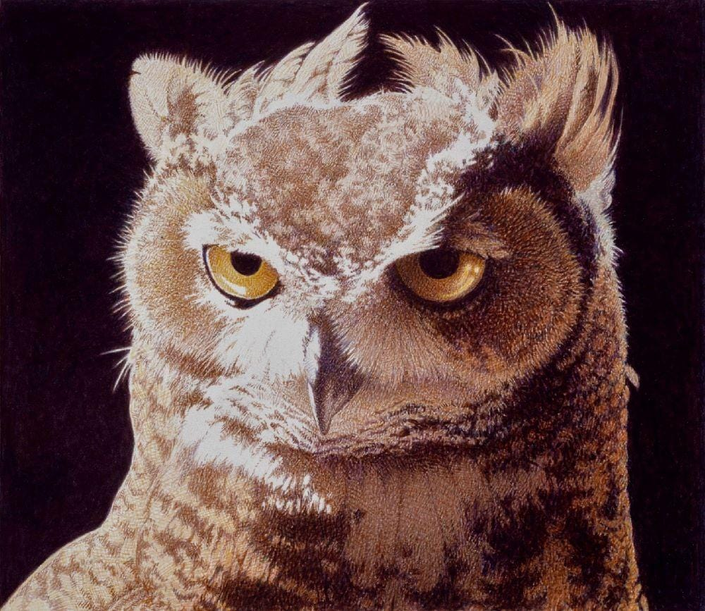 Horned Owl's yellow eyes stare out, exquisitely detailed feathers depicted in shades of tans and browns with creamy whites.