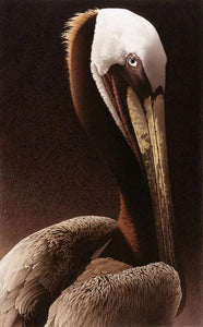 Rich velvet brown neck with brilliant white feathers and soft yellow beak, this portrait of a brown pelican looks at you eye to eye. A rich brown subtly textured background fades to pale.
