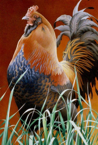 Sonny Boy rooster wears his rich colors ranging from oranges, golds, greys to blues standing proudly in light dappled green grass
