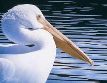 Load image into Gallery viewer, White pelican, yellow beak, floating meditativly on dark blue black waters