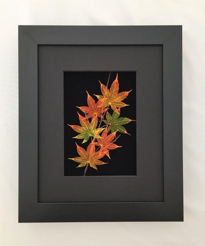 Nature's Leaves in Shadow Box Frame
