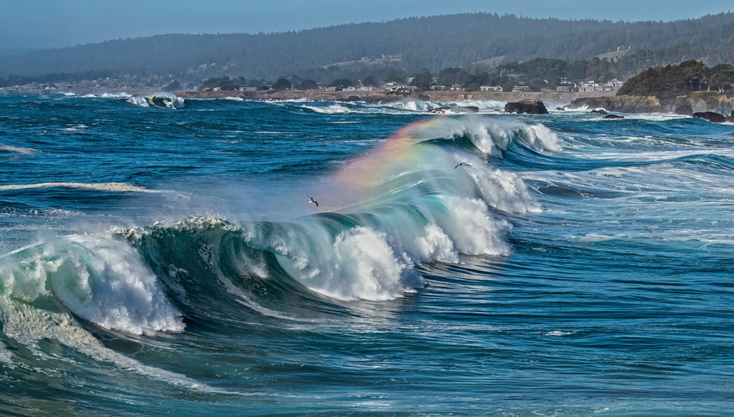 magnificent wave caught with a rainbow halo above and birds riding the air just above.