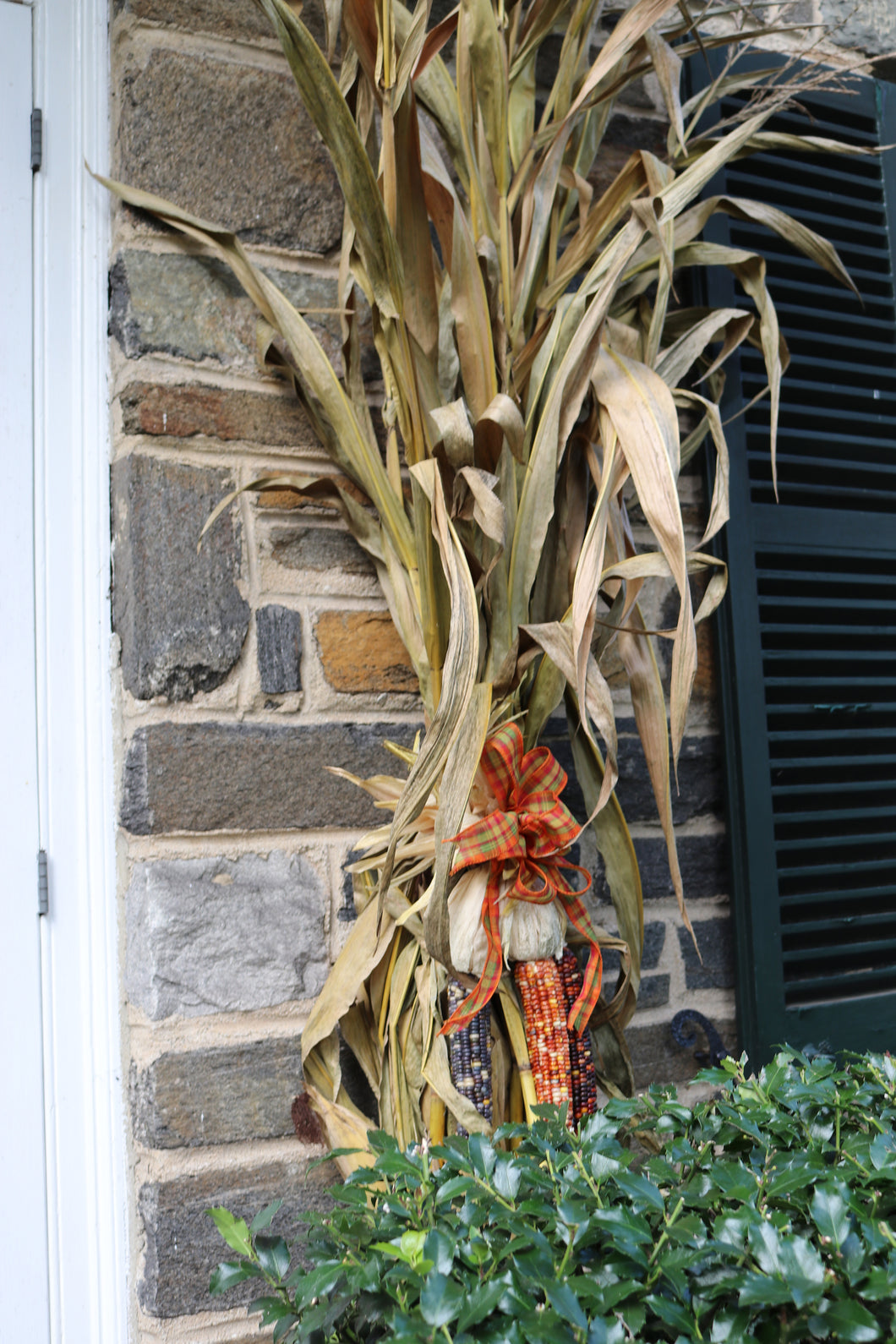 Corn Stalks 11/Bunch