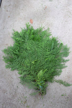 Load image into Gallery viewer, Evergreen Bunch Port Orford Cedar