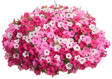 Load image into Gallery viewer, Mixed Combo #10 Hanging Basket
