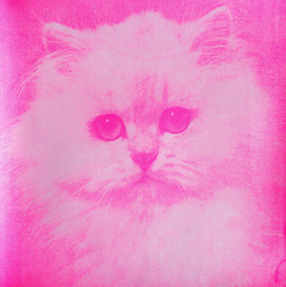 Blofelds Cat, Pink