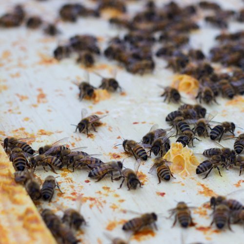 What's the Buzz? Bee Products and Their Health Benefits