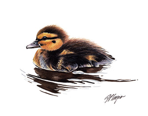 Duckling swimming in clear water