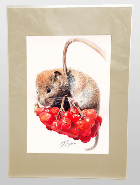 RED BERRIES - A4 Giclee art print