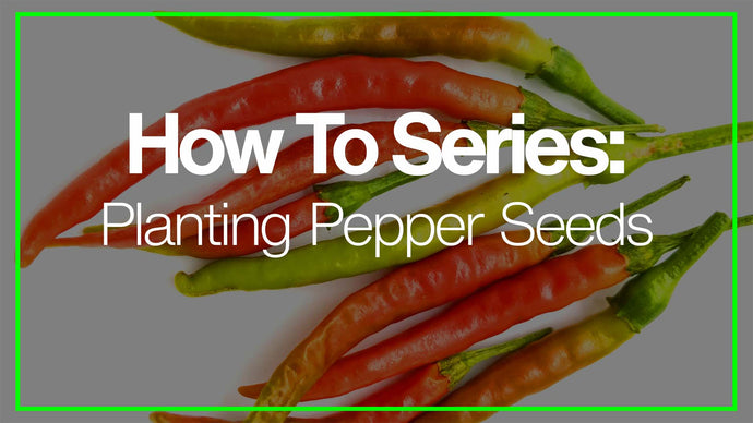 How To Plant Hot Pepper Seeds