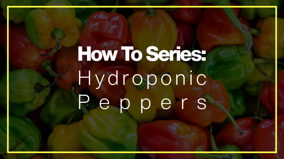 How To Grow Hot Peppers In Hydroponics