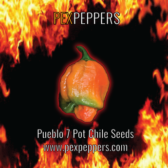 Trinidad Red 7 Pot Chile Seeds