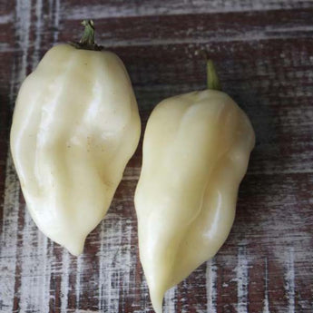 White Ghost Pepper x White Habanero Pepper Seeds