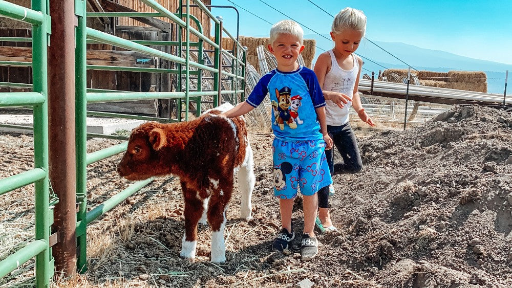 McLane Family Farms Northern California Beef Ranch