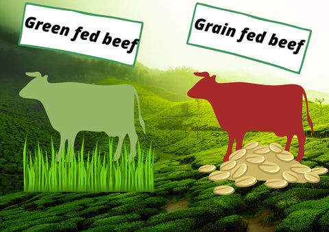 Grass-fed vs grain-fed beef graphic