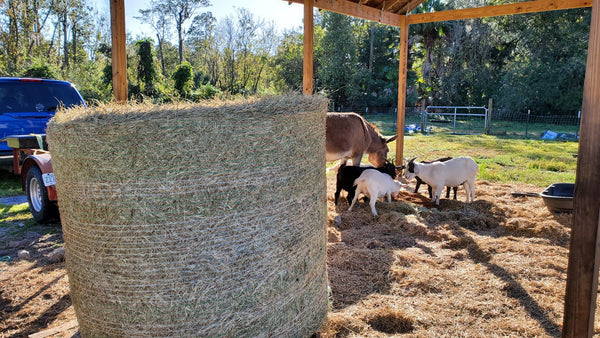 Donate a Round Bale of Hay