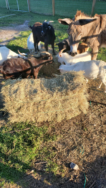Donate a Bale of Hay
