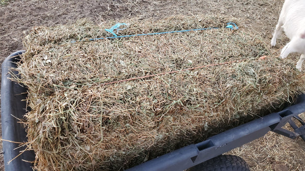 Donate a Bale of Peanut Hay