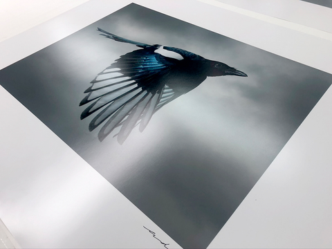 Magpie in production
